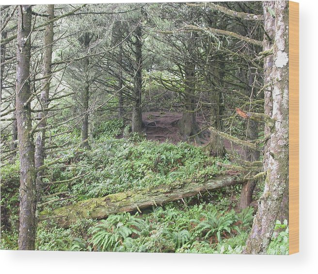 Landscape Wood Print featuring the photograph A Shady Spot by Yvette Pichette