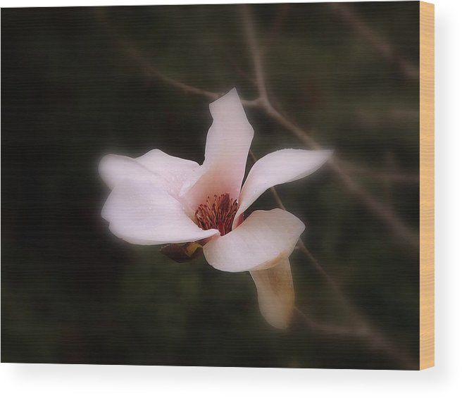 White Wood Print featuring the photograph A Soft Glow by Judy Waller