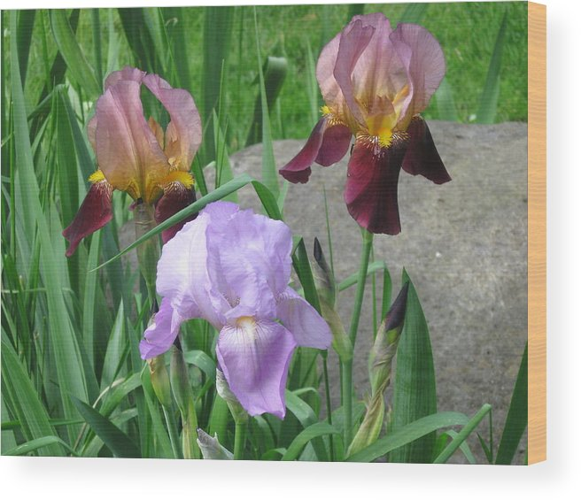 Nature Wood Print featuring the photograph A Trios Of Irises by Rose Dellinger
