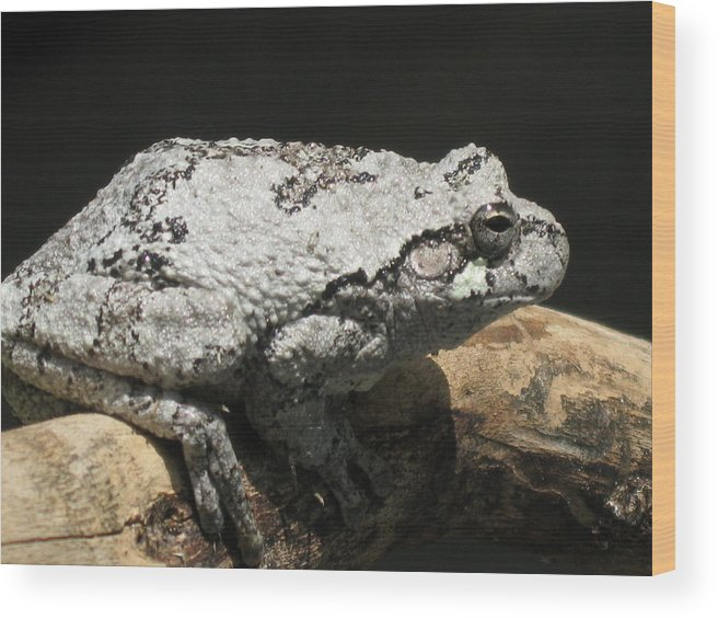 Nature Wood Print featuring the photograph A Visitor by Rose Dellinger