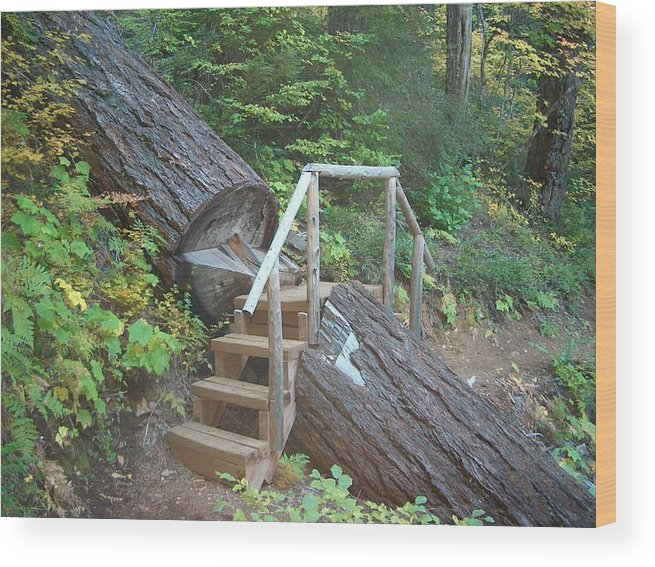 Hiking Trail Bend Oregon Walking Wood Print featuring the photograph Along The Trail by Janet Hall