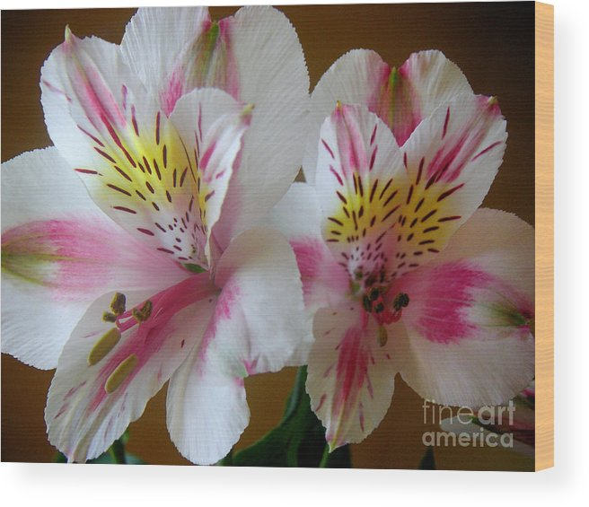 Nature Wood Print featuring the photograph Alstroemerias - Heralding by Lucyna A M Green