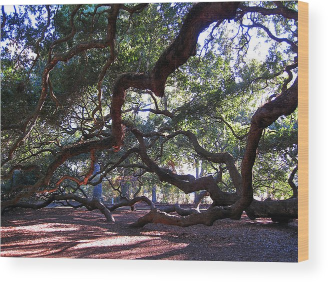 Photography Wood Print featuring the photograph Angel Oak Side View by Susanne Van Hulst