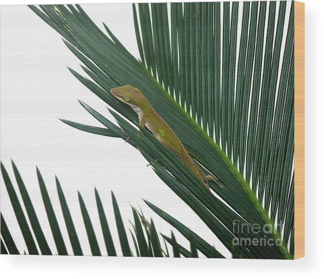 Nature Wood Print featuring the photograph Anole With Palm - Coy by Lucyna A M Green