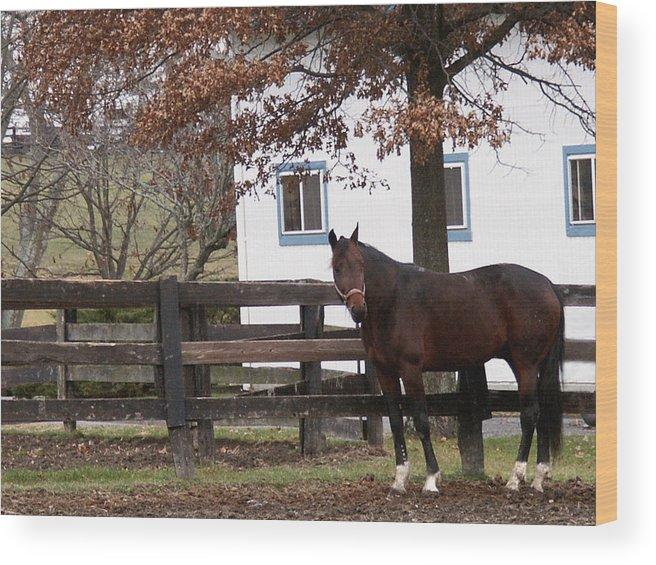 Horse Wood Print featuring the photograph Anticipation by Chuck Shafer
