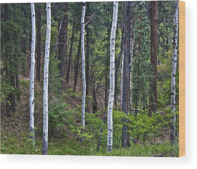 Aspens Wood Print featuring the photograph Aspens In The Woods by Neil Doren
