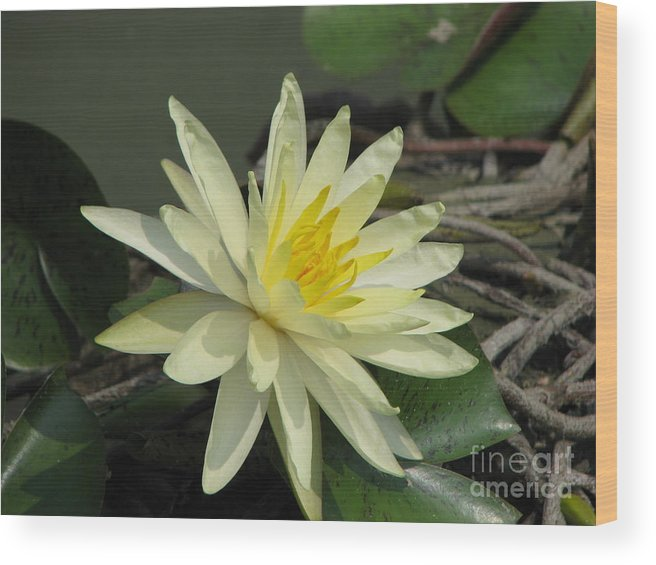 Lilly Wood Print featuring the photograph At The Pond by Amanda Barcon