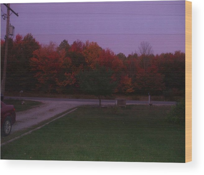 Wood Print featuring the photograph Autum Glow by Rebecca Fitchett