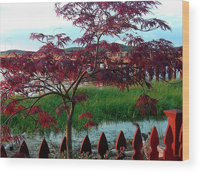 Maple Wood Print featuring the photograph Autumn Approaching by Caroline Urbania Naeem