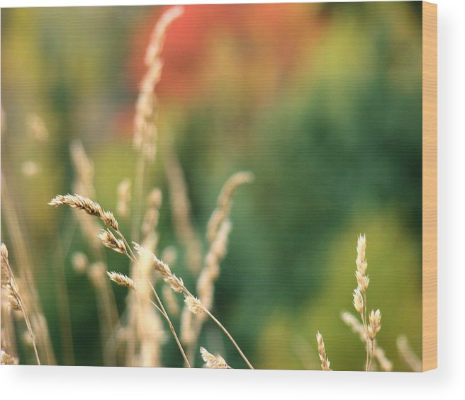 Bokeh Wood Print featuring the photograph Autumn Bokeh by Tingy Wende