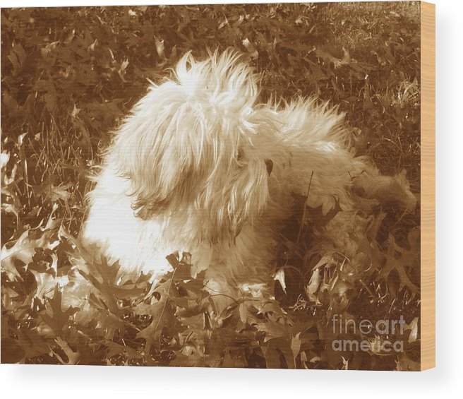 Dog Teddy Outdoors Leaves Fall Autumn Animals Wood Print featuring the photograph Autumn Breeze 2 by Reina Resto