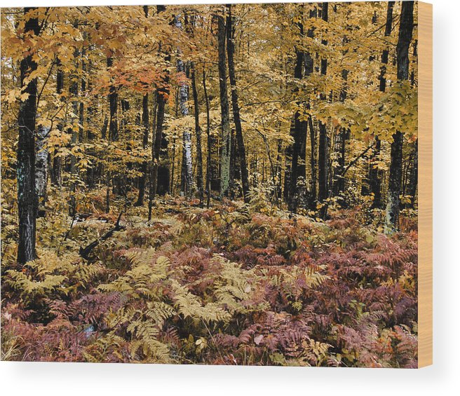 Folioage Wood Print featuring the photograph Autumn Dampness by Tingy Wende