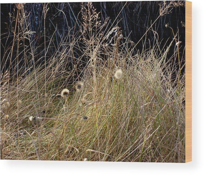 Natue Wood Print featuring the photograph Autumn Grass by Marilynne Bull