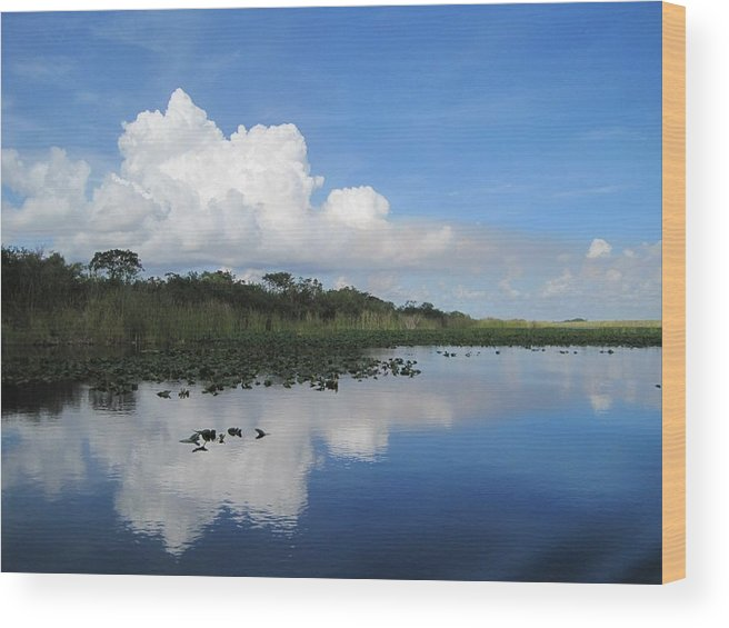 Everglades Wood Print featuring the photograph Azul Reflexion by Margaret Marzullo