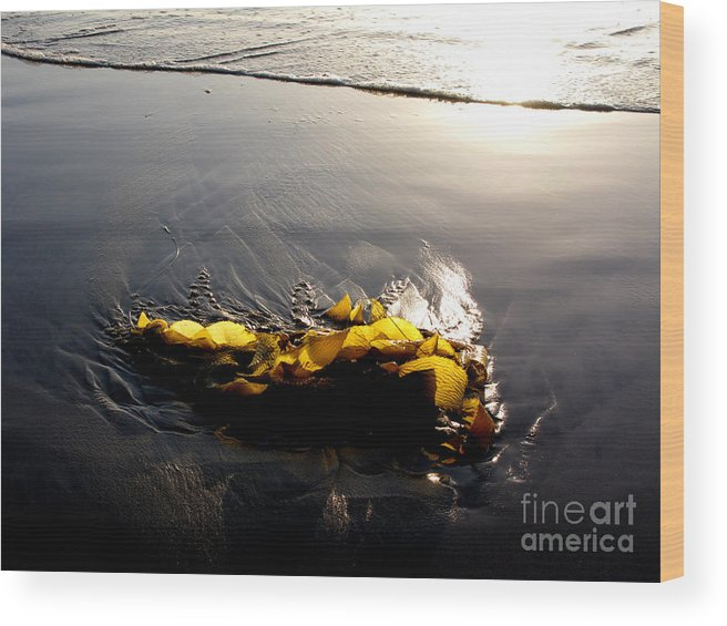 Kelp Wood Print featuring the photograph Backlit Kelp by PJ Cloud