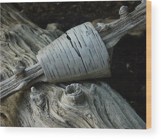 Nature Wood Print featuring the photograph Bark Curl by Eric Workman