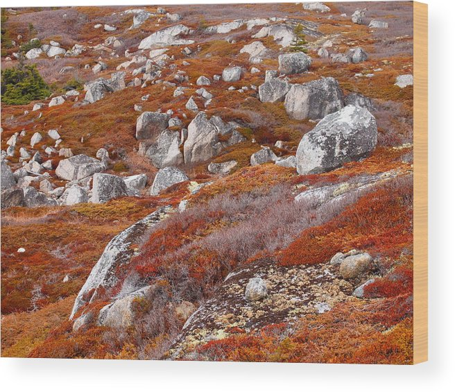 Barrens Wood Print featuring the photograph Barrens by Rod Stewart