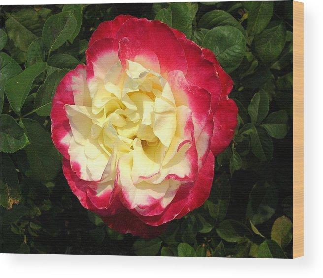 Flower Wood Print featuring the photograph Beautiful Crinkles by Caroline Urbania Naeem