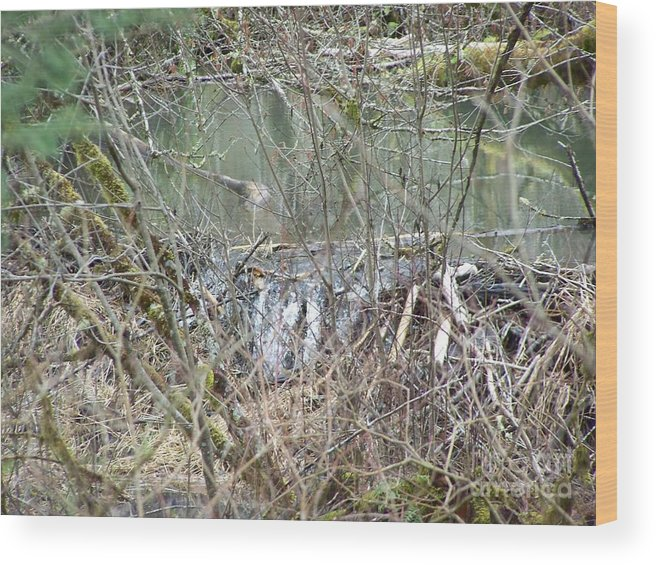 Digital Photography Wood Print featuring the photograph Beavers Dam by Laurie Kidd