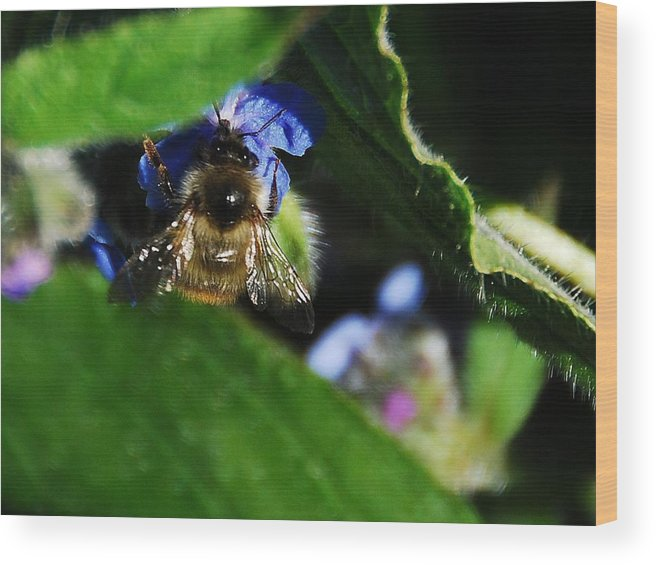 Wood Print featuring the photograph Bee by JK Photography