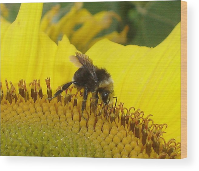 Bee's Wood Print featuring the photograph Bee On Sunflower 2 by Chandelle Hazen