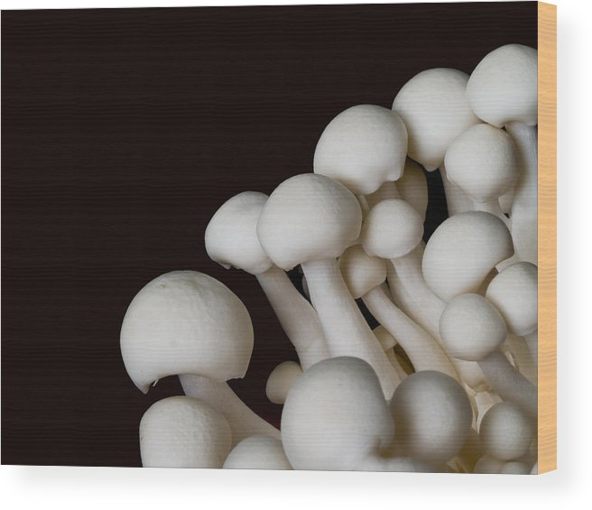 Mushroom Wood Print featuring the photograph Beech Mushrooms by Jim DeLillo