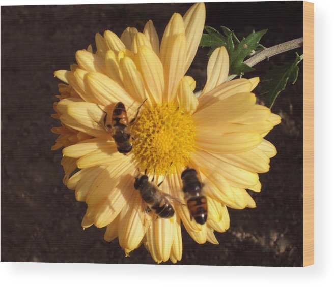 Landscape Wood Print featuring the photograph Bees On Feast by David Du Hempsey