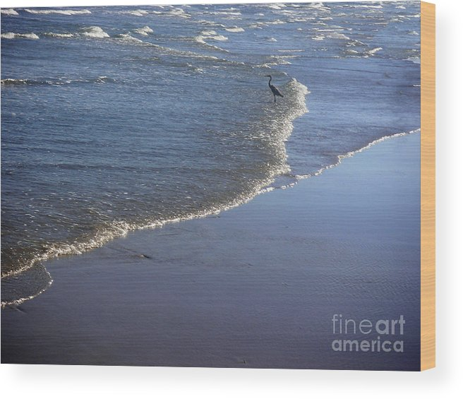 Nature Wood Print featuring the photograph Being One With The Gulf - At Peace by Lucyna A M Green