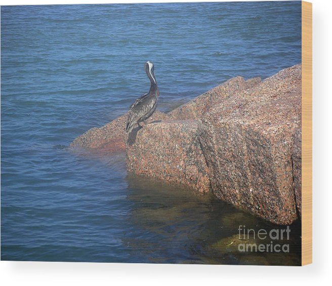 Nature Wood Print featuring the photograph Being One With The Gulf - Ignoring by Lucyna A M Green