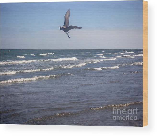 Nature Wood Print featuring the photograph Being One With The Gulf - On Wings by Lucyna A M Green