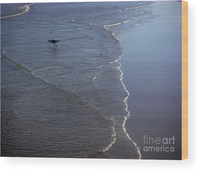 Nature Wood Print featuring the photograph Being One With The Gulf - Pinpointing by Lucyna A M Green