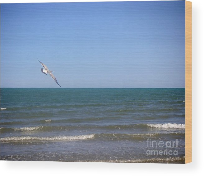 Nature Wood Print featuring the photograph Being One With The Gulf - Soaring by Lucyna A M Green