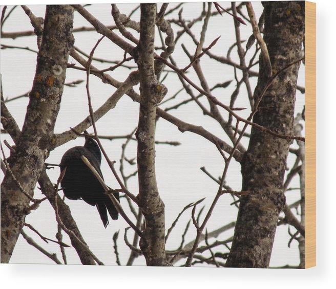 Blackbird Wood Print featuring the photograph Blackbird In A Tree by William Tasker