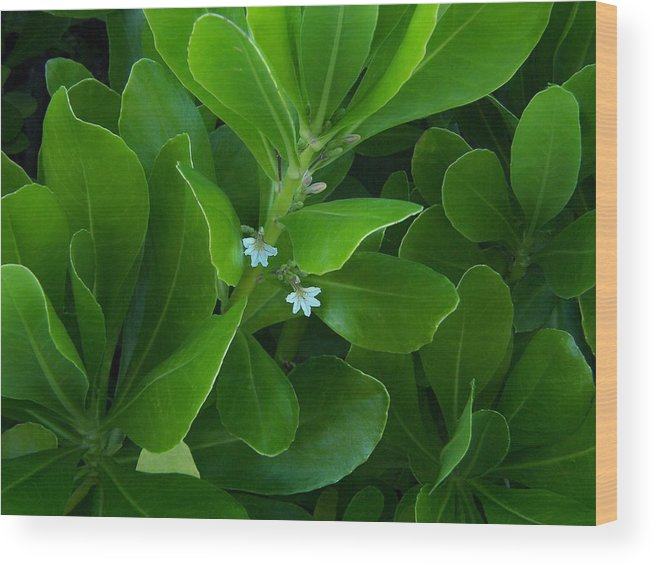 Wild Flowers Wood Print featuring the photograph Blackwater Green by Charles Peck