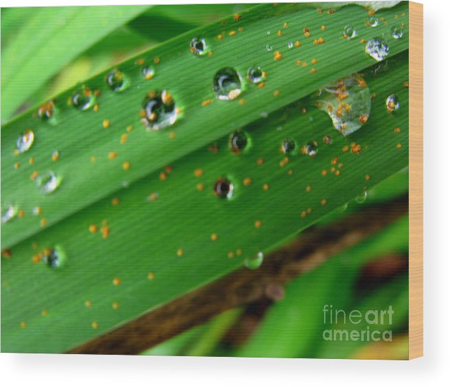 Plant Wood Print featuring the photograph Blades by PJ Cloud