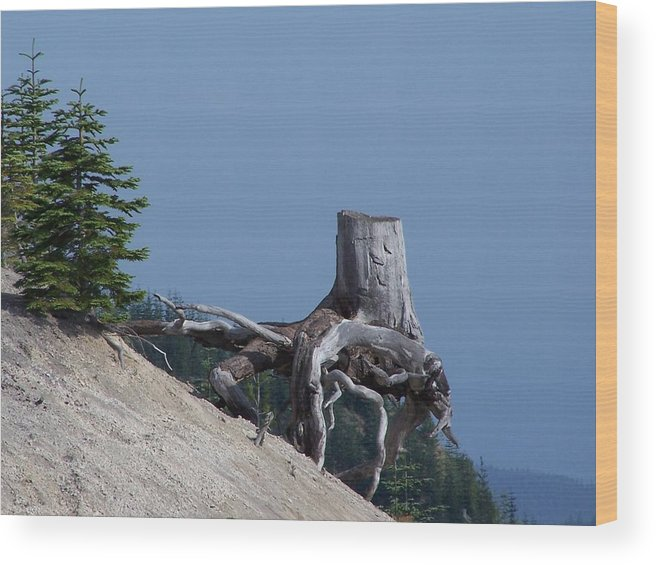 Landscape Wood Print featuring the photograph Blasted Stump by Gene Ritchhart