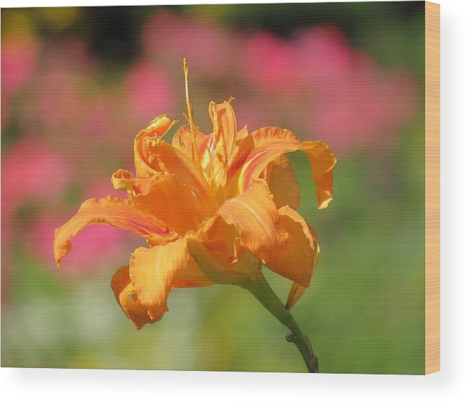 Daylily Wood Print featuring the photograph Blooming In August by MTBobbins Photography