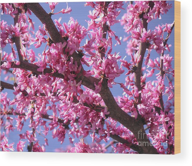 Nature Wood Print featuring the photograph Blooming Red Buds by Lucyna A M Green