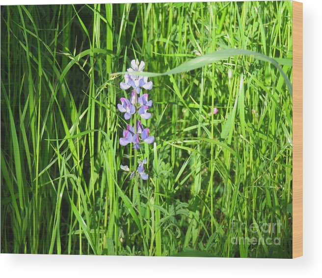 Floral Wood Print featuring the photograph Blossom In The Grass by Suzanne Leonard