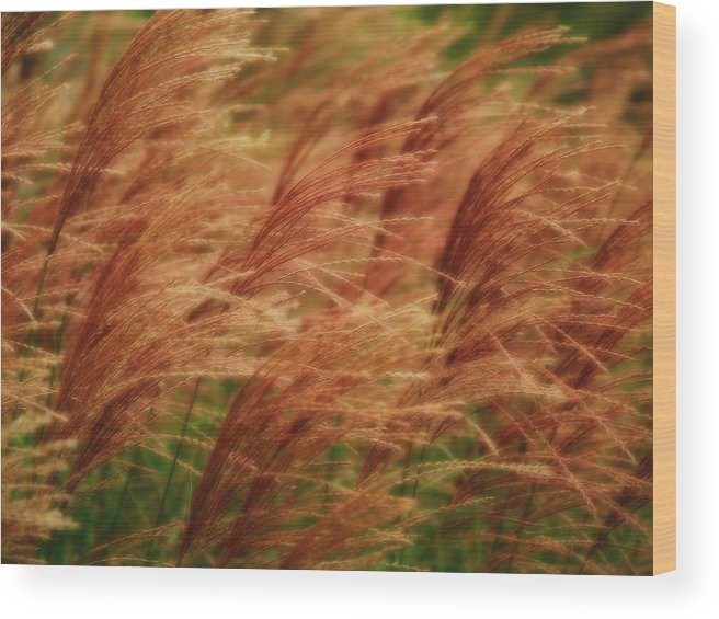 Win Wood Print featuring the photograph Blowing In The Wind by Gaby Swanson