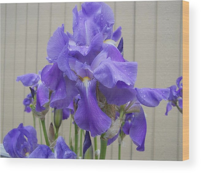 Flowers Wood Print featuring the photograph Blue Iris by Laurie Kidd