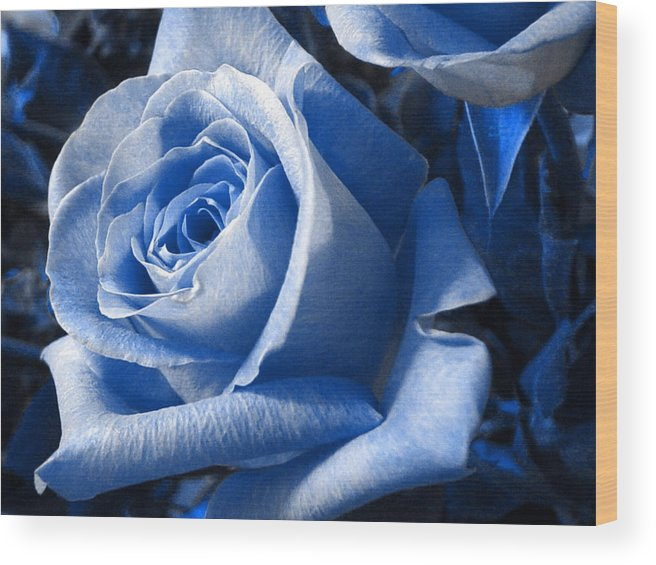 Blue Wood Print featuring the photograph Blue Rose by Shelley Jones
