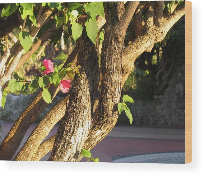 Pink Wood Print featuring the photograph Braided by Stephanie Richards