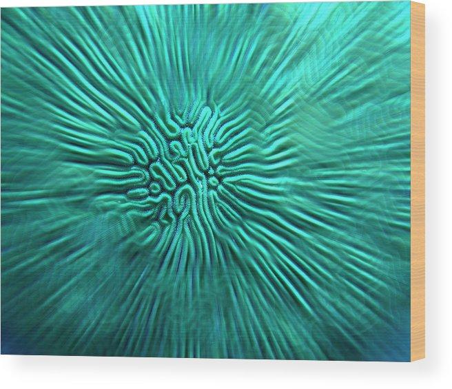 Brain Wood Print featuring the photograph Brain Coral by Robert Stein