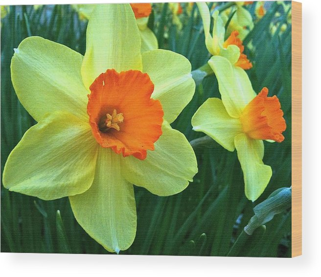 Brookside Gardens Wood Print featuring the photograph brookside Sring s.2 by Mpagijk Mpagijk