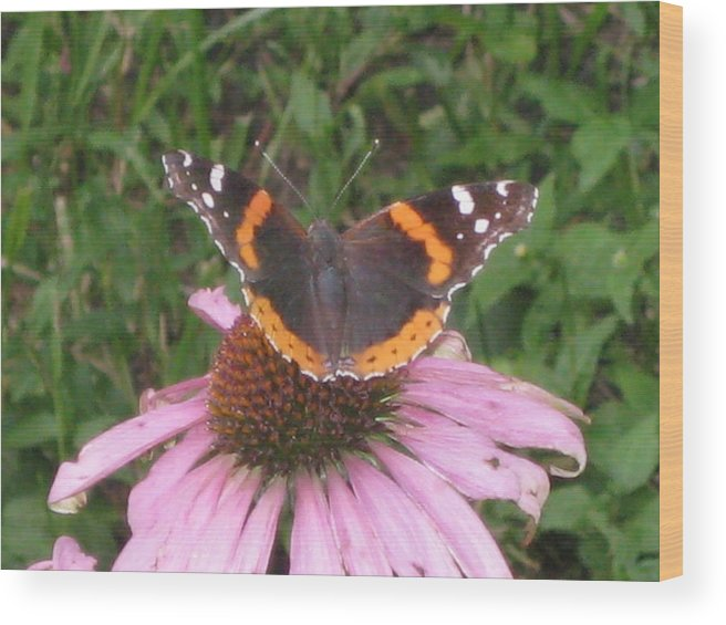 Echinacea Wood Print featuring the photograph Butterfly Garden by Renee Antos