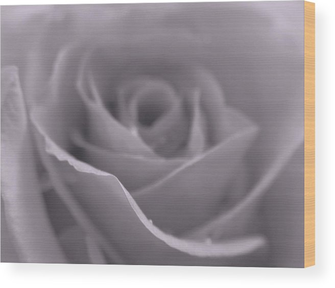 Rose Wood Print featuring the photograph Bw Rose by Juergen Roth