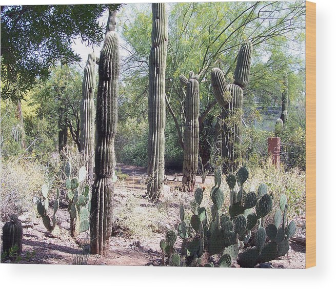 West Wood Print featuring the photograph Cactus West by Claude Marshall