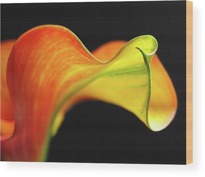 Flower Wood Print featuring the photograph Calla Lily by Juergen Roth