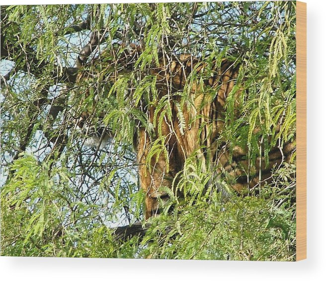 Tiger Wood Print featuring the photograph Can You See Me........ by Nick Gustafson